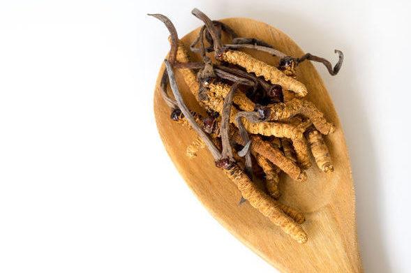 Cordyceps sinensis: Ασιατικός μύκητας που περιέχει μια σειρά από θρεπτικά συστατικά με ευεργετικά οφέλη για την υγεία