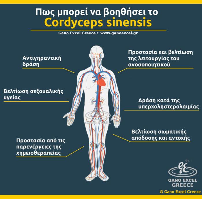 Infographic με θέμα Πως μπορεί να βοηθήσει το Cordyceps sinensis