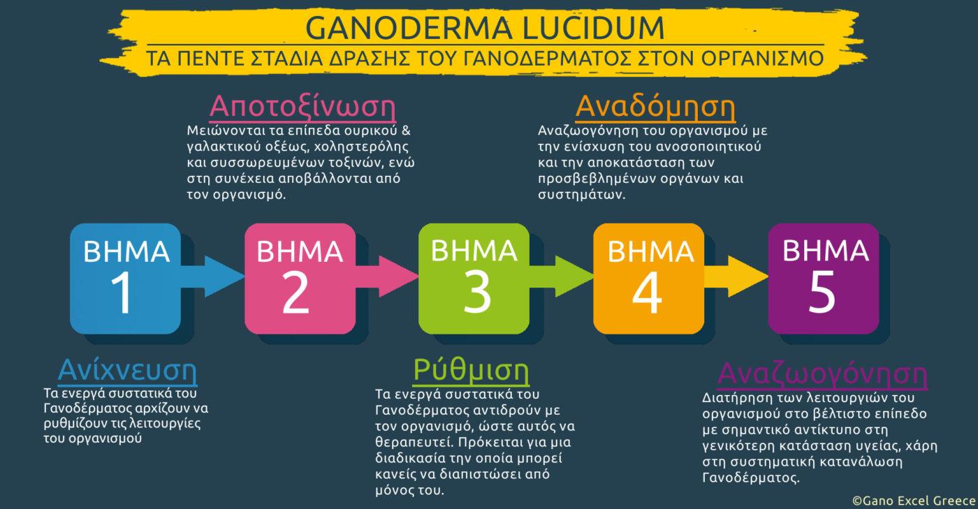 Infographic με θέμα Τα πέντε στάδια δράσης του Γανοδέρματος (Ganoderma lucidum) στον οργανισμό